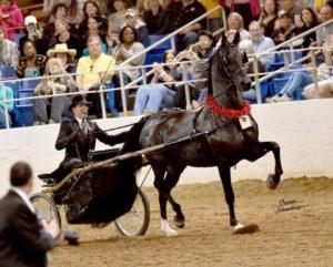 scottsdale arabian horse show (feb)