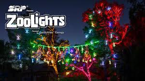 zoo lights (nov)